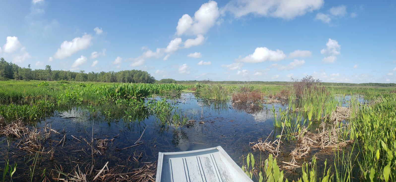 View of wetlands