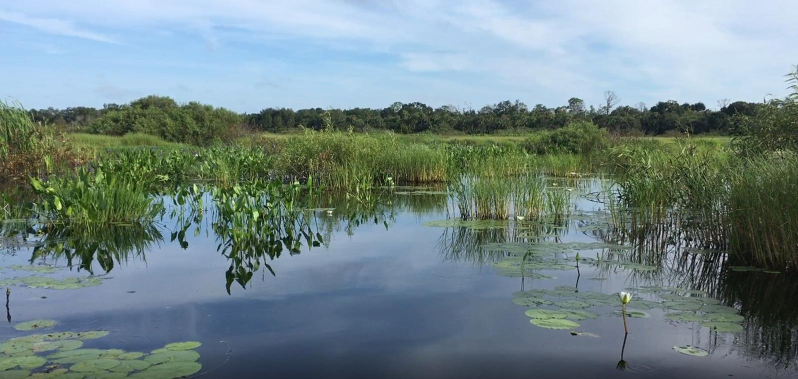 A video still of the marsh restoration plot three months after mechanical clearing of woody shrubs.