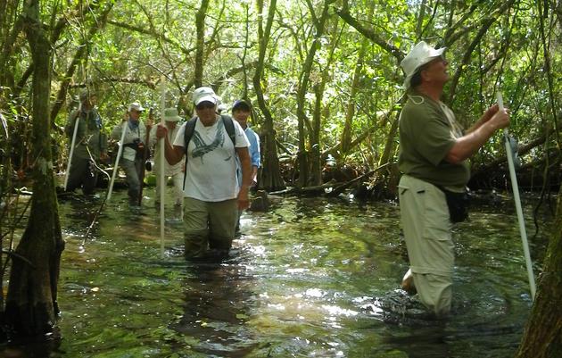 Corkscrew Swamp Walks