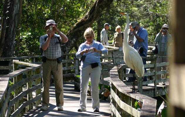 Complimentary Guided Boardwalk Tours for Visitors