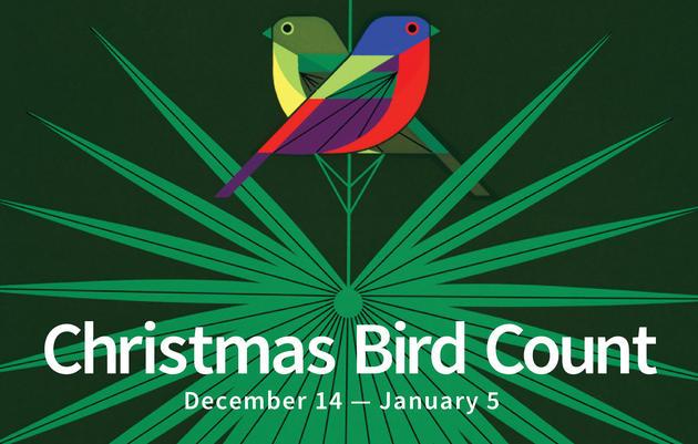 Audubon Christmas Bird Count at Corkscrew
