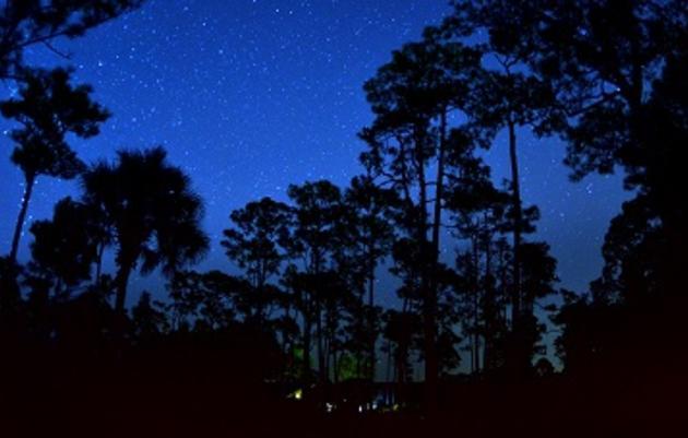 Summer Night Walk at Corkscrew Swamp Sanctuary