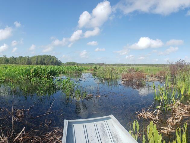 Managing Wetlands in Summer Rainy Season