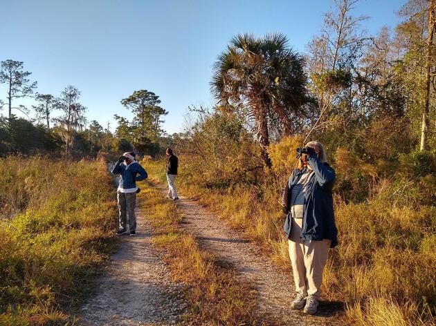 Audubon's 121st Christmas Bird Count at Corkscrew Swamp Sanctuary