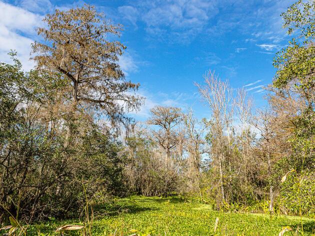 Celebrate Corkscrew Swamp Sanctuary on World Wetlands Day!