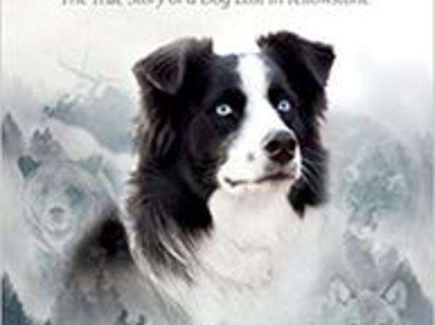 'Bring Jade Home' Book in Nature Store