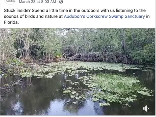 Corkscrew Swamp Sanctuary Streams Worldwide Via Facebook Live