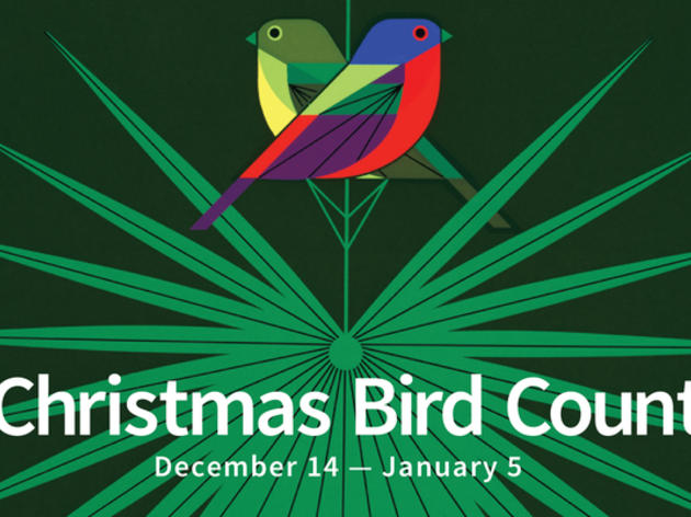 Audubon Christmas Bird Count at Corkscrew
