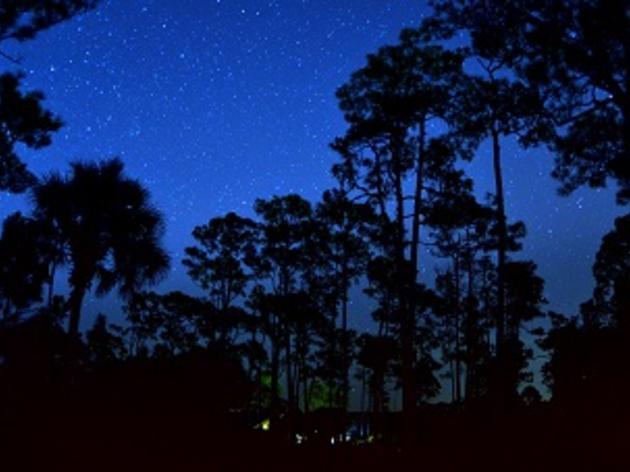 Summer Night Walks at Corkscrew Swamp Sanctuary
