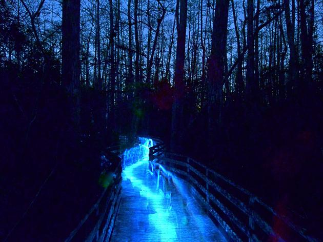 Night Walks at Corkscrew Swamp Sanctuary