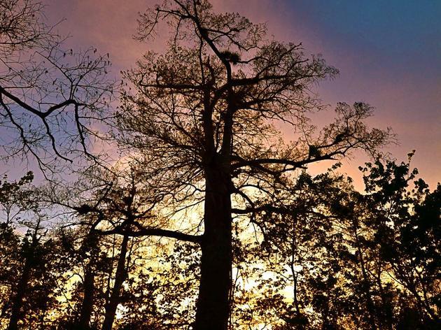 Sunset Stroll at Corkscrew Swamp Sanctuary