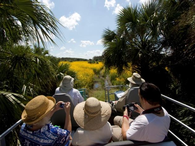 Corkscrew Swamp Buggy Tours