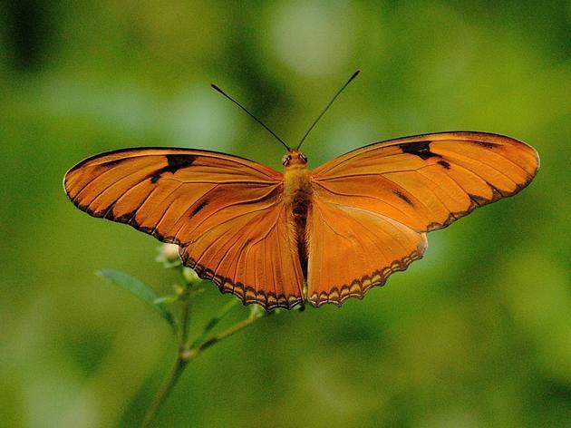Corkscrew Butterfly Orientation Workshop & Walk