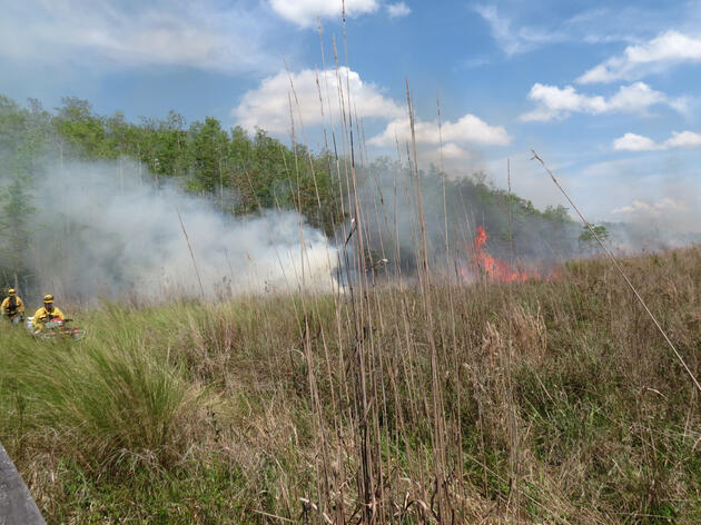 Prescribed Fire Conducted North of the Exit Boardwalk