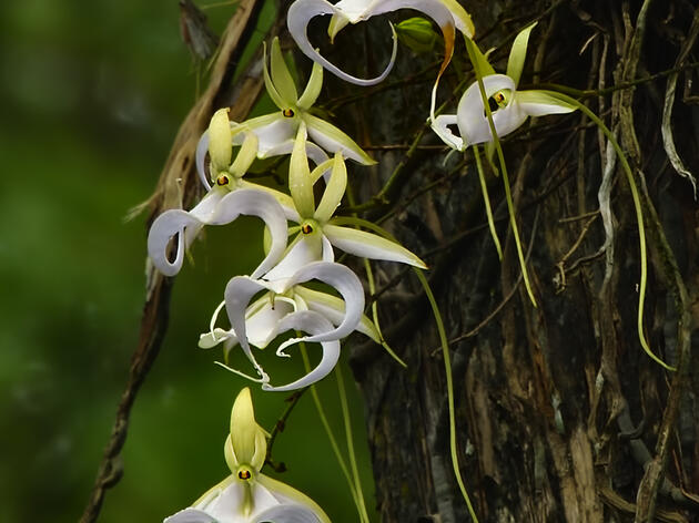 Ghost Orchid Webinar Scheduled for Sept. 9
