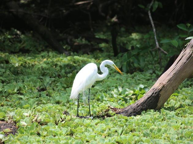 Audubon's Corkscrew Swamp Sanctuary Recognized by International Wetland Scientists