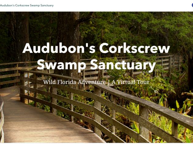 Audubon's Corkscrew Swamp Sanctuary Releases Virtual Field Trip