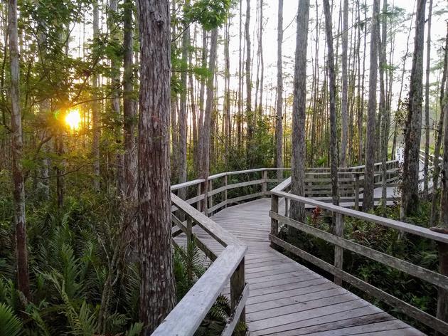 Visit Corkscrew Swamp Sanctuary