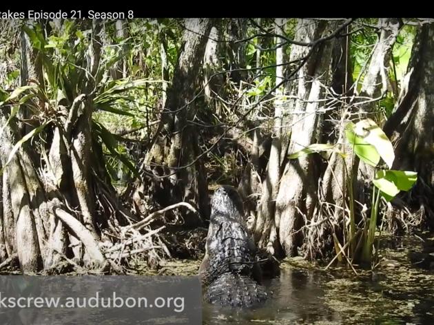 Corkscrew Swamp Sanctuary Featured on Local TV Broadcast