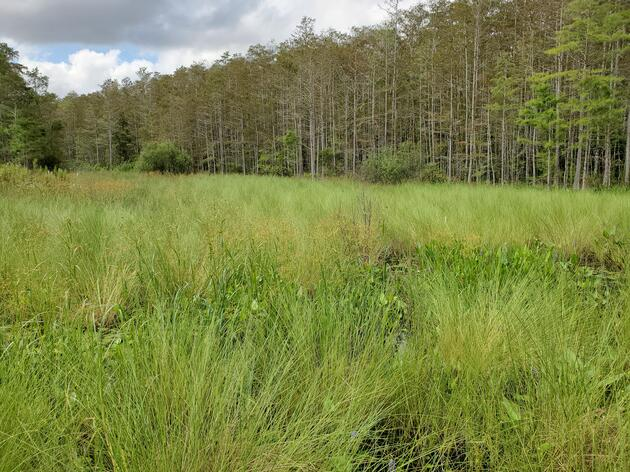 Working to Reverse Ecological Damage to our Wetlands