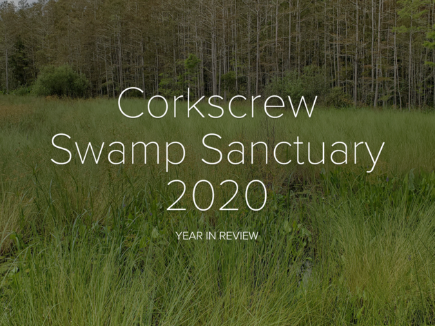 Corkscrew Swamp Sanctuary 2020 Year in Review