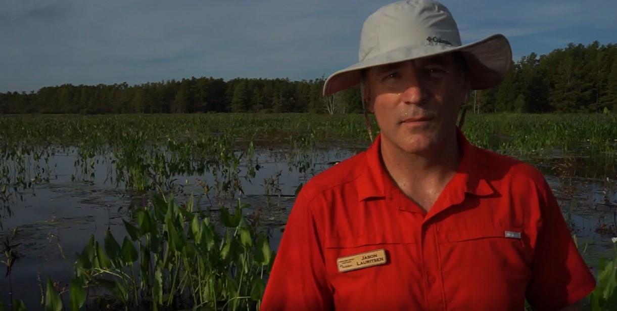 A mosaic of pickerel weed and water lilies, evident behind the author, provide an inviting setting for waterfowl, especially in the first two years following the clearing of the woody shrubs.