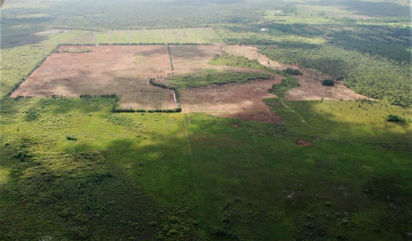 Aerial image of marsh