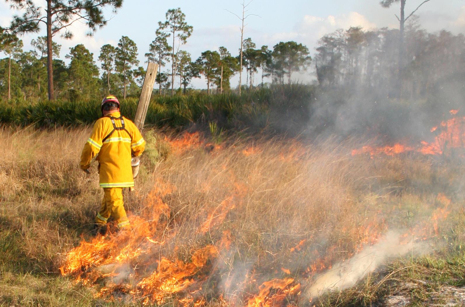 Conducting a prescribed burn at Audubon's Corkscrew Swamp Sanctuary
