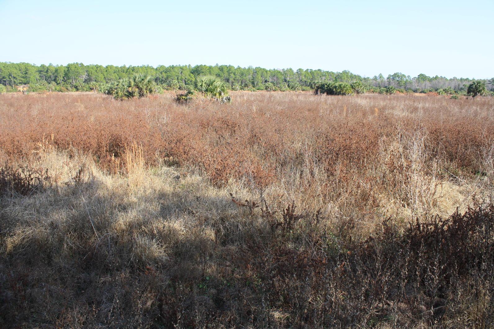 Panther Island Mitigation Bank Expansion   Audubon Corkscrew