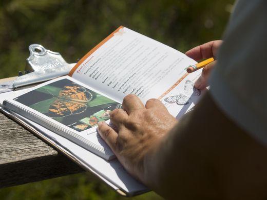 Volunteers check a field guide description of butterflies