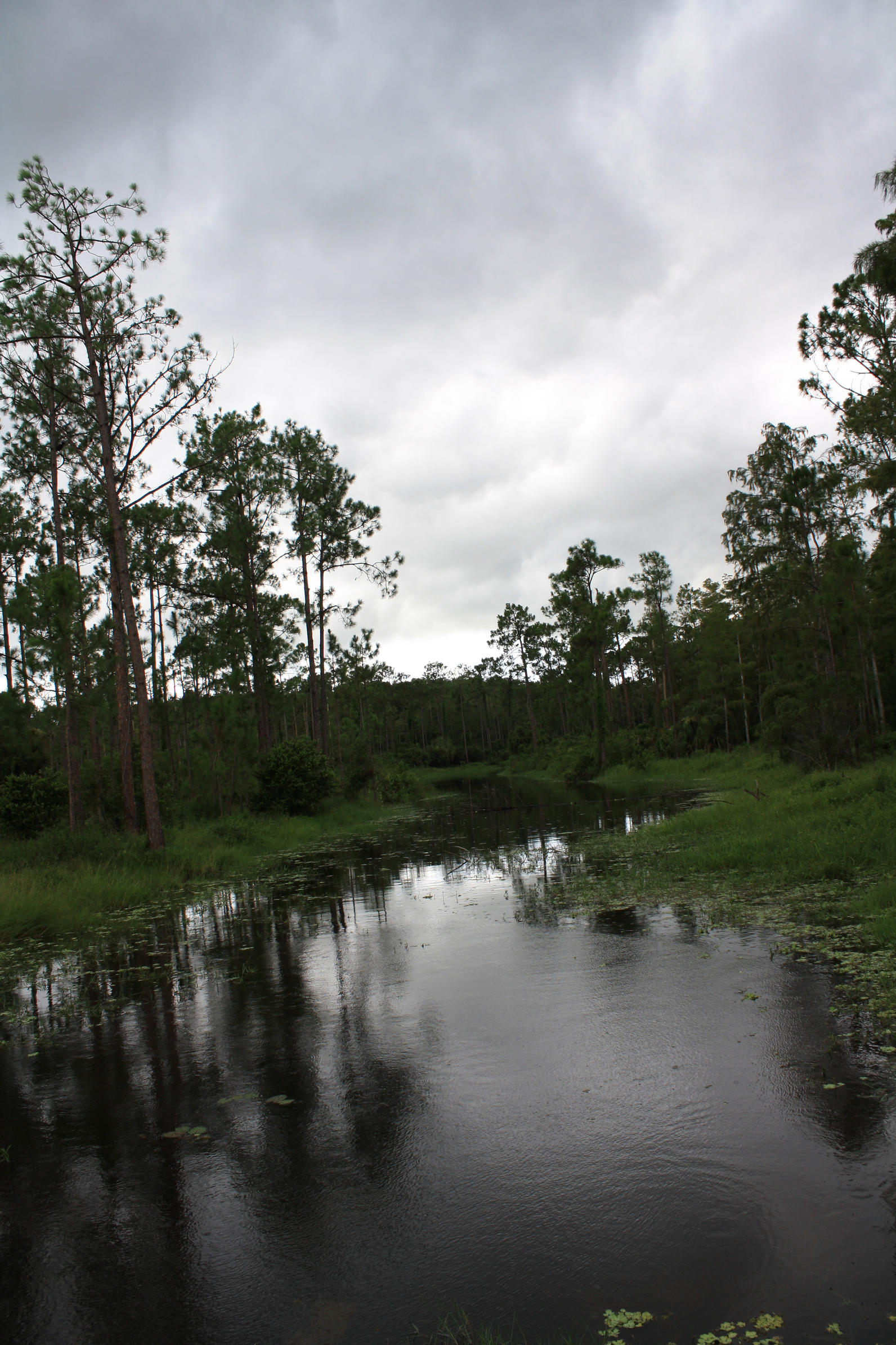 Hydrology   Audubon Corkscrew Swamp Sanctuary