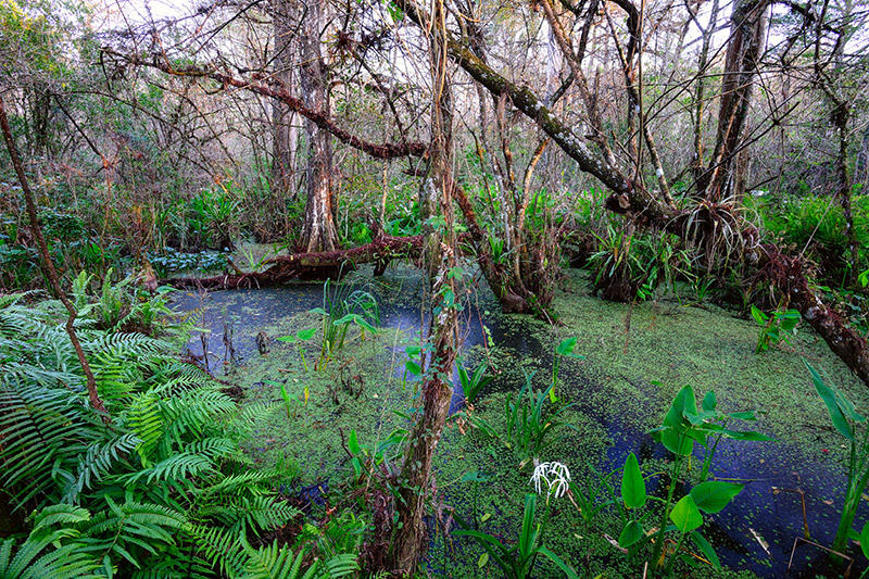 Corkscrew Swamp. Photo by RJ Wiley.
