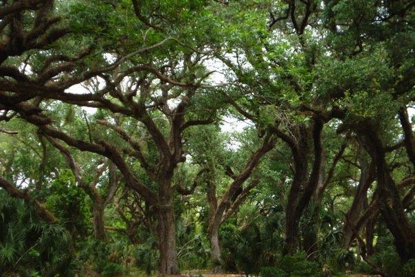Oak Hammocks Audubon Corkscrew Swamp Sanctuary