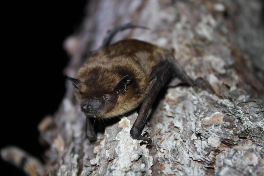 Bat Sanctuary Tours